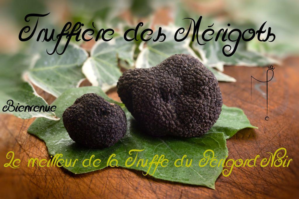 Truffe truffes noire du perigord truffes noires dordogne aquitaine truffe noire tr ffe 24 - Comment cuisiner les truffes noires ...